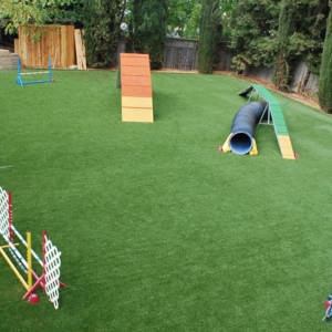 Backyard_Dog_Agility_Course_Resized