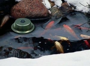 pond winter treatment